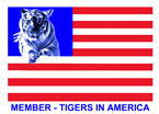 Tigers in America