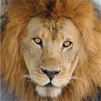 rescue lion profile