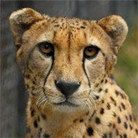 rescue cheetah sanctuary