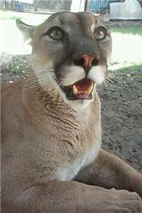 Playful Cougar